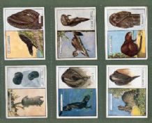 Tobacco cigarette cards Animals & their Furs 1929